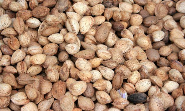 Frutos secos y enfermedades cardiovasculares