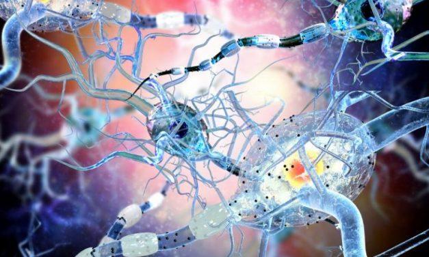 Pruebas en compuesto neuroprotector